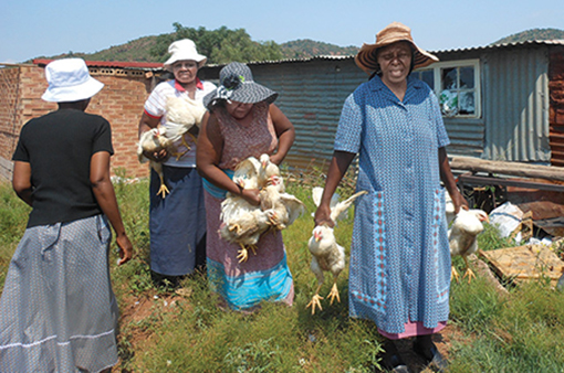African communities, women are the sole caretakers of the livestock