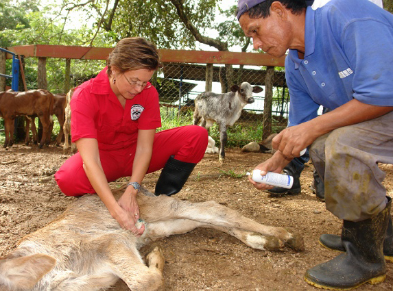 Cynthia Duerr, V99, checks an animal for screwworm infection. Photo: Courtesy of Cynthia Duerr