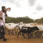 03/10/2017 - Dadaab, Garissa County - A refugee wipes the dust from his face as he herds his goats to graze in the early morning on March 10, 2017.  (Alonso Nichols/Tufts University)