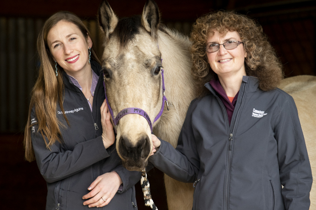 Veterinarians Caroline McKinney, left, and Daniela Bedenice right, posing with a horse in the middle of them