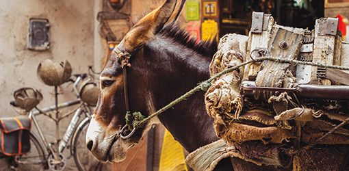 A mule loaded up with goods is seen tied up on a back street in Marrakesh.Although they can be slow, they are the ideal mode of transport for the local people who need to move items around in the narrow streets.