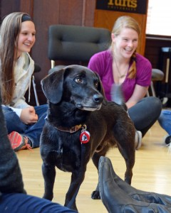 Chronicle interview; 10/20/14. Dr. Megan Mueller was interviewed by Chronicle News Magazine (WCVB-Boston) regarding PAWS for People and the benefits of human animal interaction.