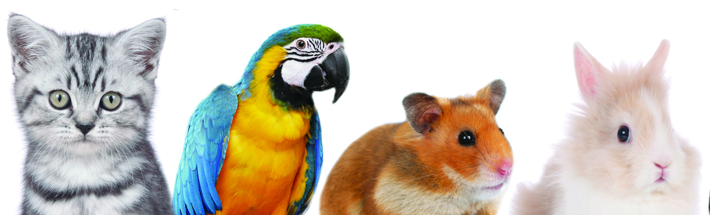 line of different pets, heads of dog,cat,bird,rodent isolated