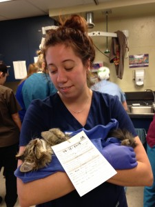 Daisy with kitten at Lerner Community Cats Spay/Neuter Clinic