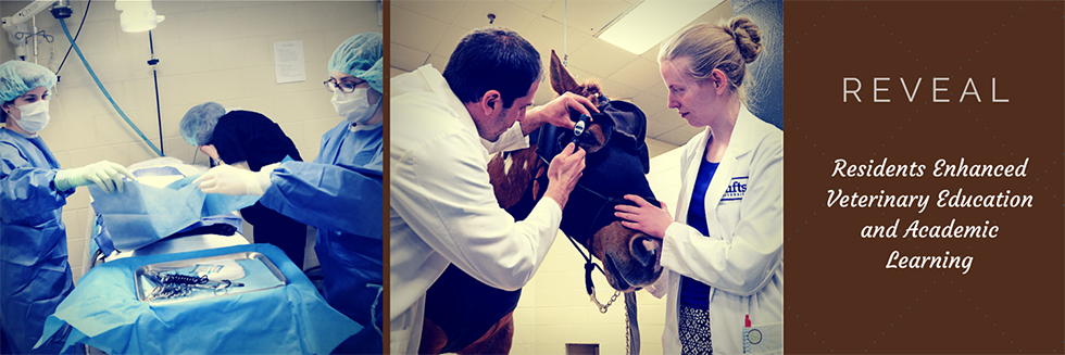 Tufts REVEAL (Residents Enhanced Veterinary Education and Academic Learning) Program