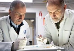 Drs. Patrick Skelly and Akram Da'darah studying schistosomiasis in a petri dish in the lab