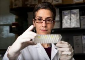 Dr. Gillian Beamer, faculty member in the Department of Infectious Disease and Global Health at Cummings School in the lab