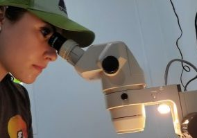 Tess van Kan, VG16, pictured here looking into a microscope on a research trip in Thailand's Nan Province