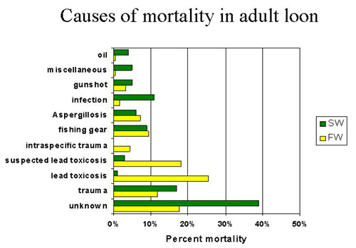 causes of mortality in adult loon