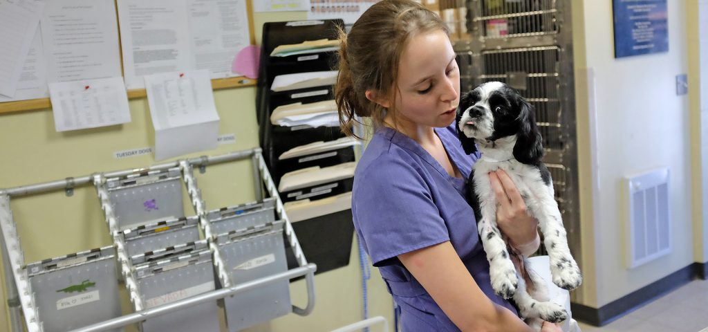 Students interact with patients in the Lerner Spay/Neuter Clinic at Cummings School of Veterinary Medicine.