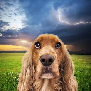 Dog with thunder and lightening in background