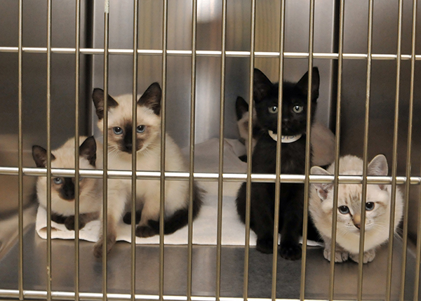 Kittens at Lerner Clinic