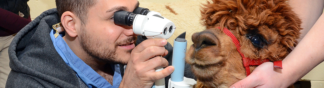Large Animal Ophthalmology
