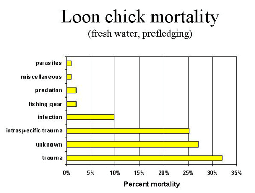 loon chick mortality