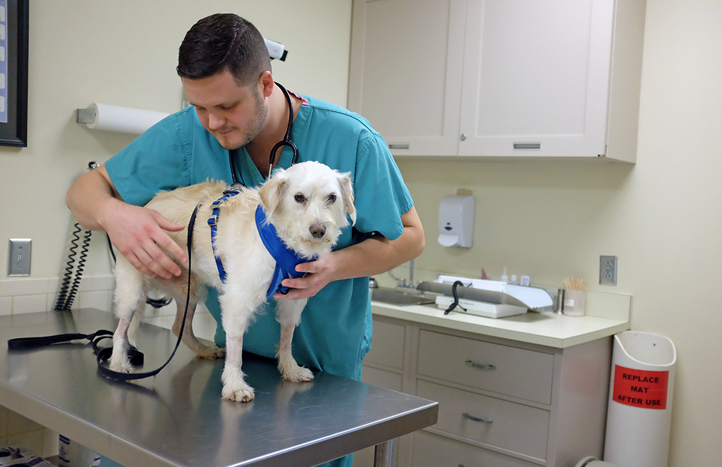 Hawkeye the dog visits the neurology department at Foster Hospital for Small Animals